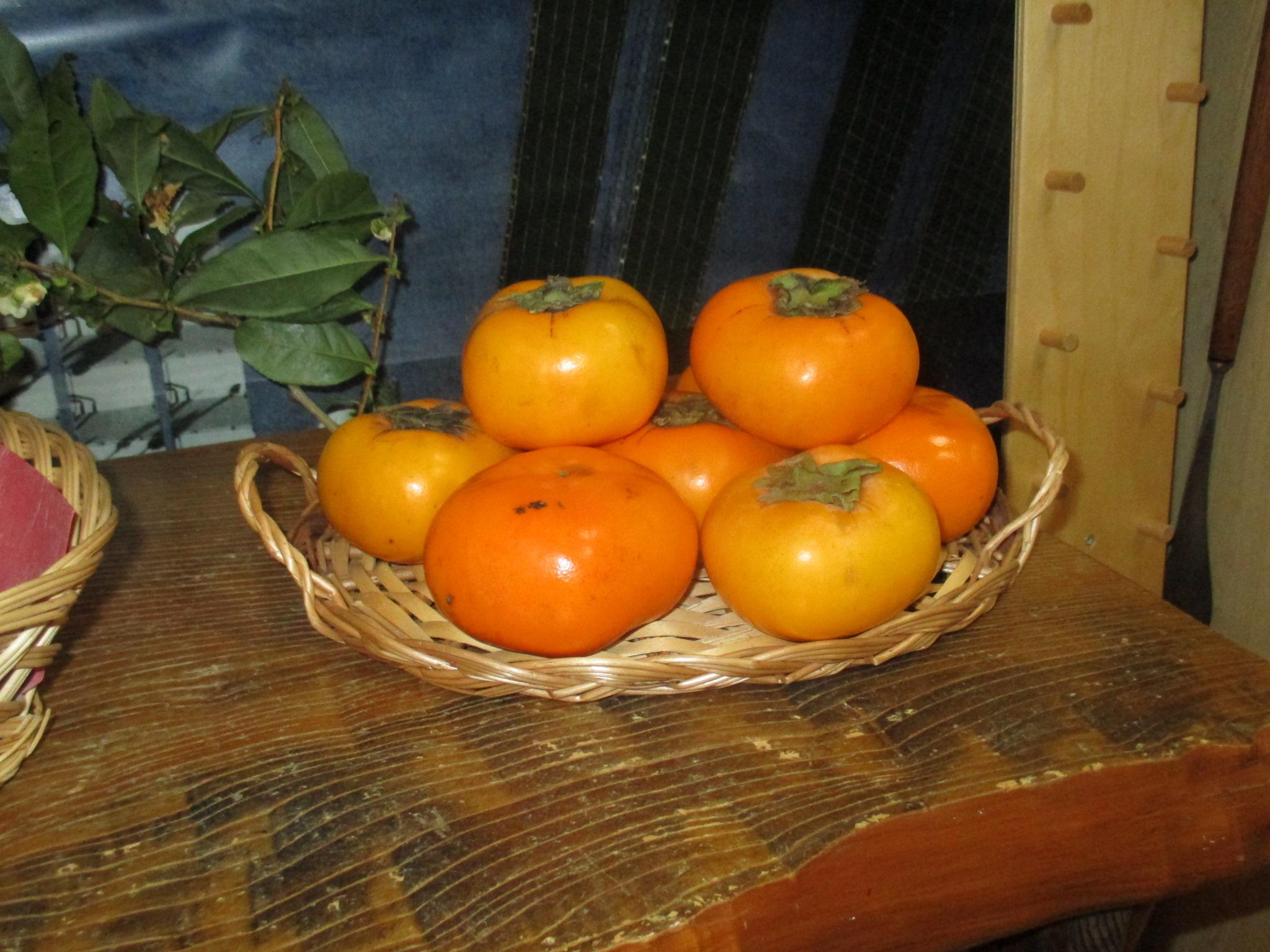 柿をたべたよ!