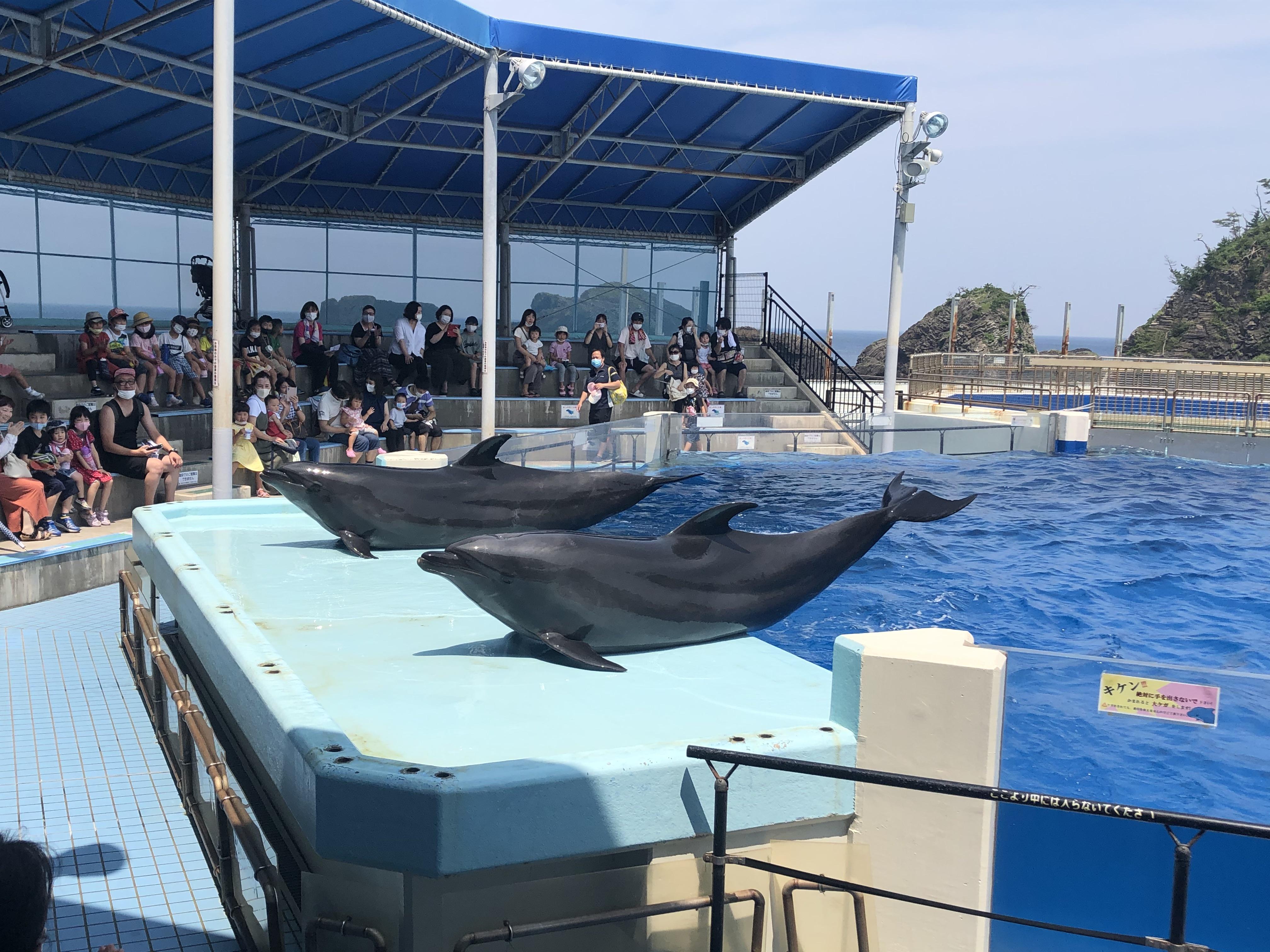 松島水族館へいこうよ!