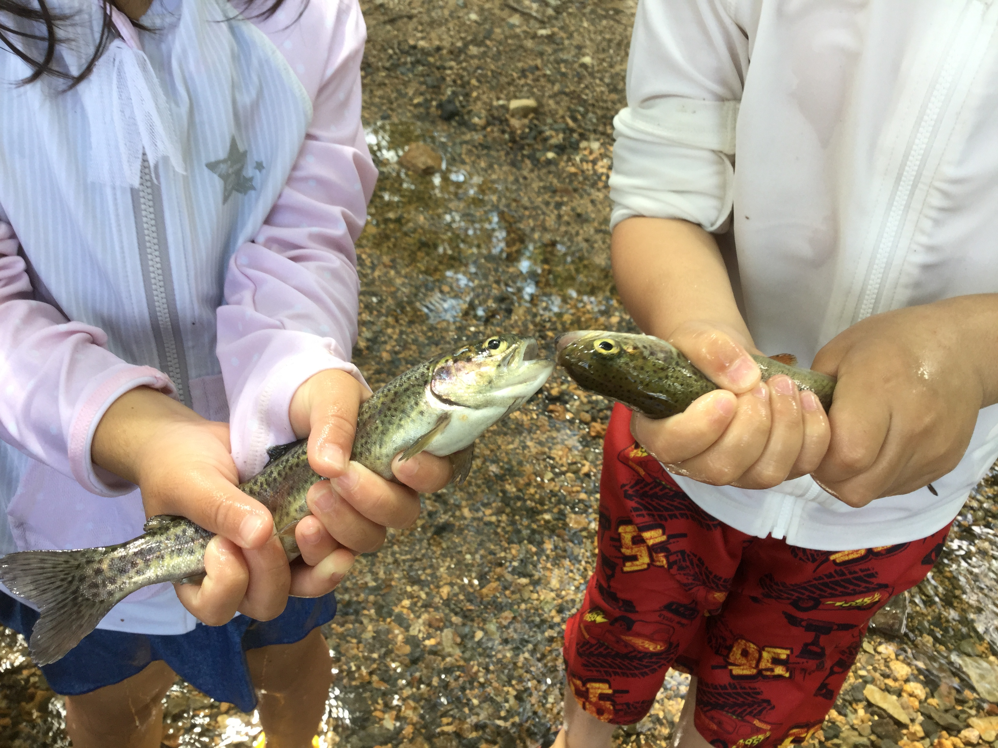魚つかみ体験